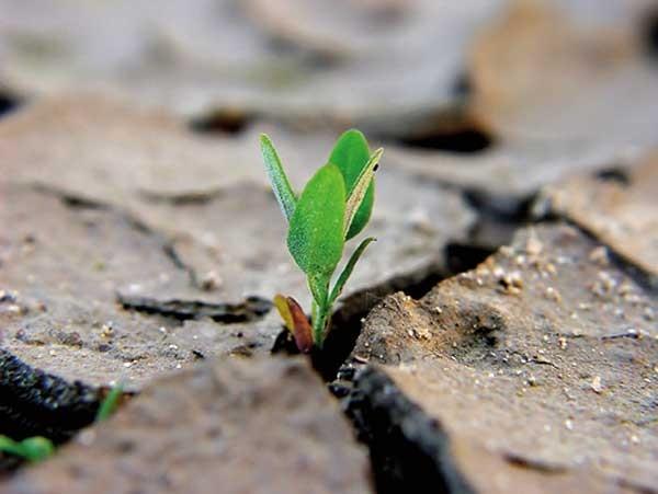 Storia dell'Ambiente: Materiali didattici
